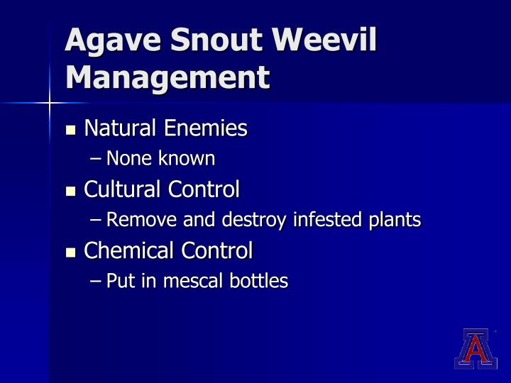 Agave Snout Weevil Management