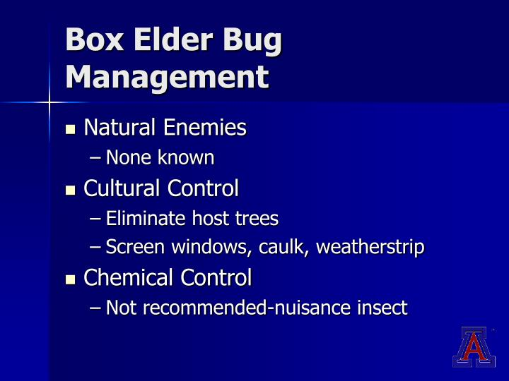 Box Elder Bug Management
