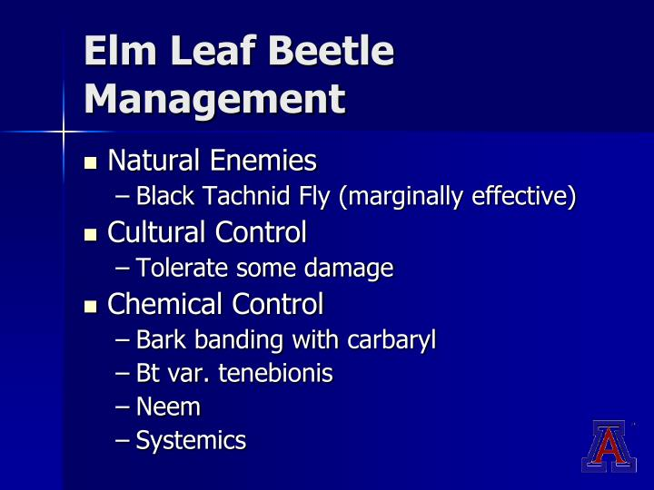 Elm Leaf Beetle Management