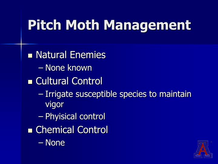 Pitch Moth Management