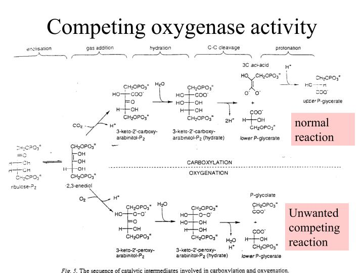 Competing oxygenase activity