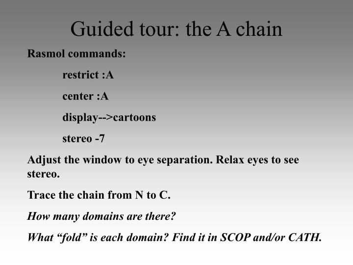 Guided tour: the A chain