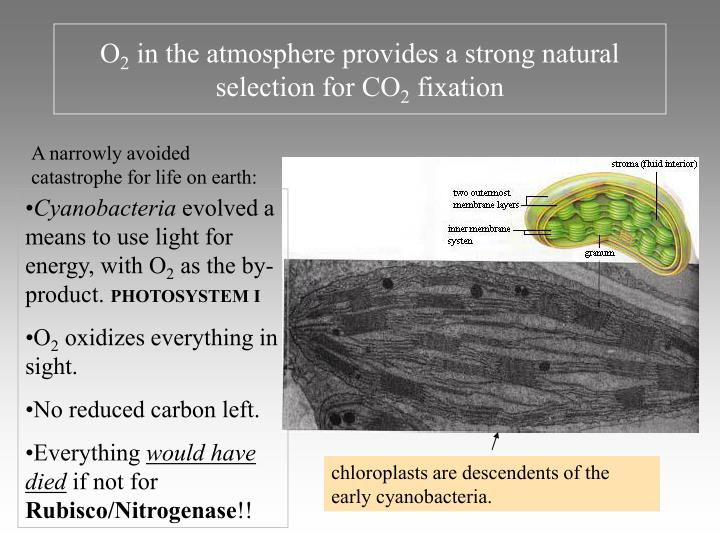 O 2 in the atmosphere provides a strong natural selection for co 2 fixation