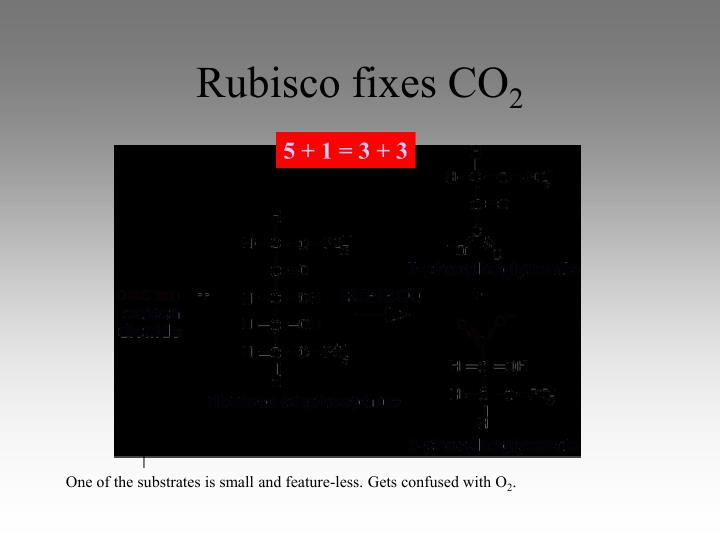 Rubisco fixes CO