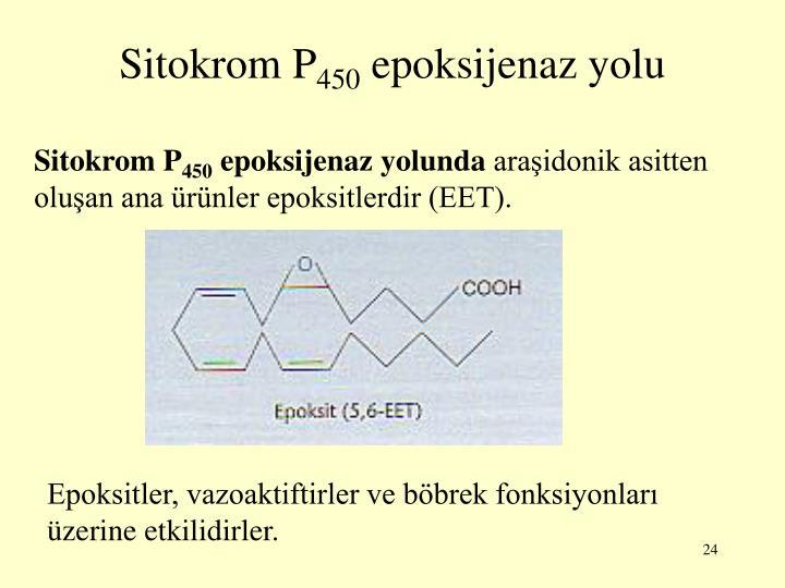 Sitokrom P