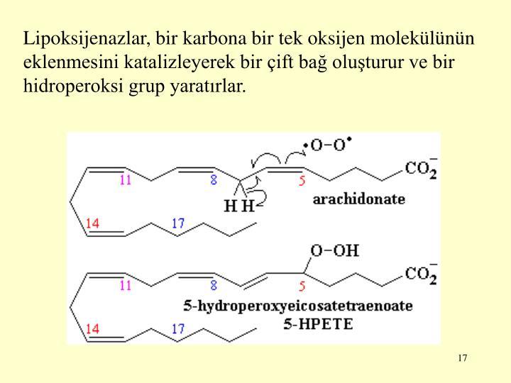 Lipoksijenazlar, bir karbona bir tek oksijen moleklnn eklenmesini katalizleyerek bir ift ba oluturur ve bir hidroperoksi grup yaratrlar.