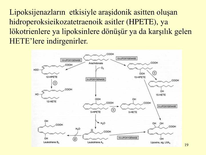 Lipoksijenazlarn  etkisiyle araidonik asitten oluan hidroperoksieikozatetraenoik asitler (HPETE), ya lkotrienlere ya lipoksinlere dnr ya da karlk gelen HETElere indirgenirler.