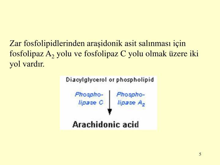 Zar fosfolipidlerinden araidonik asit salnmas iin fosfolipaz A