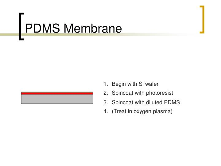 PDMS Membrane