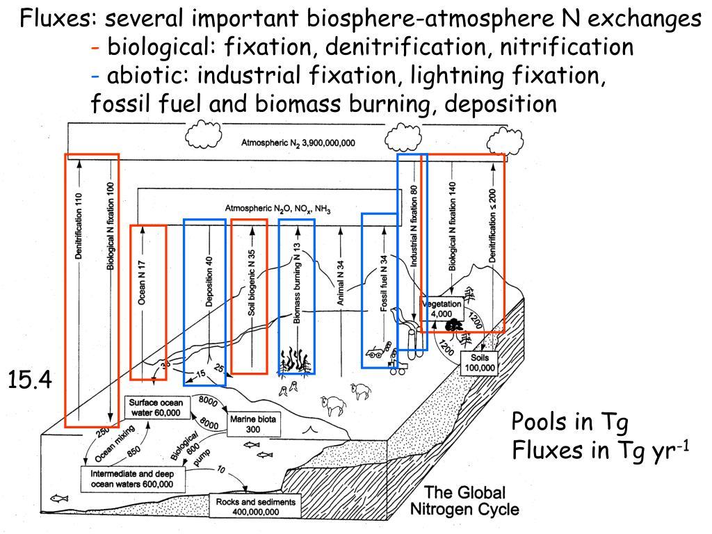 Fluxes: several important biosphere-atmosphere N exchanges