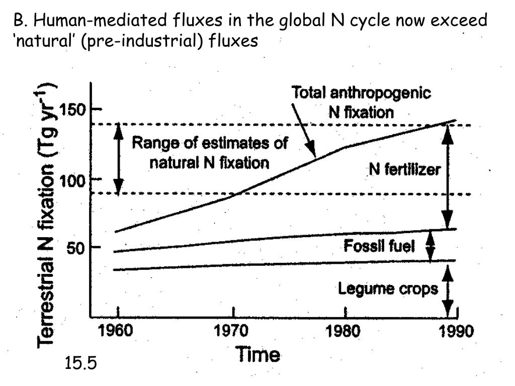 B. Human-mediated fluxes in the global N cycle now exceed
