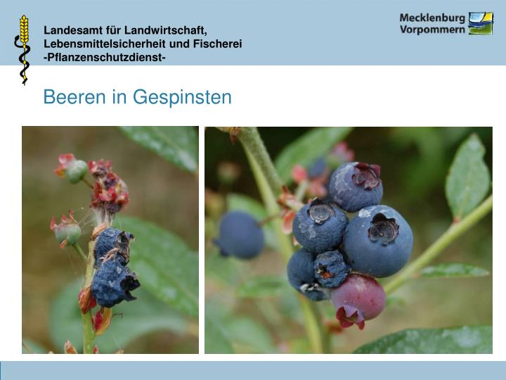 Beeren in Gespinsten