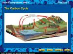 the carbon cycle6