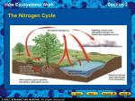 the nitrogen cycle15