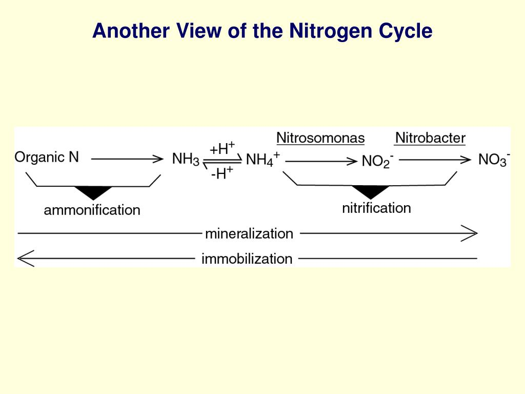 Another View of the Nitrogen Cycle