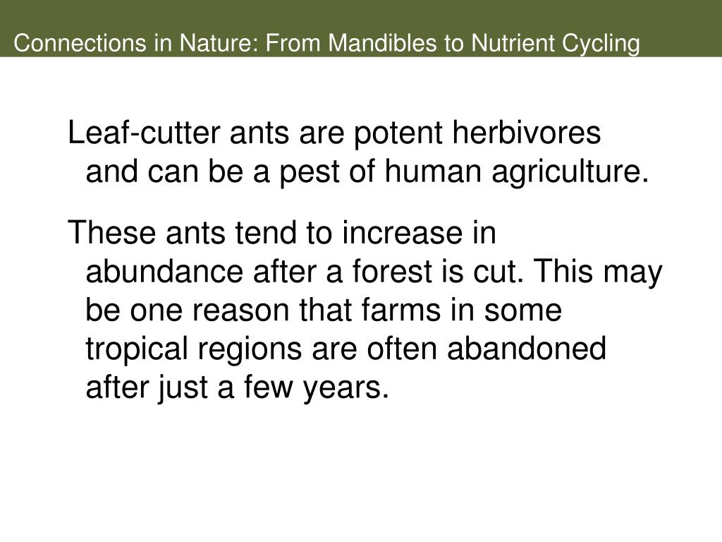 Connections in Nature: From Mandibles to Nutrient Cycling