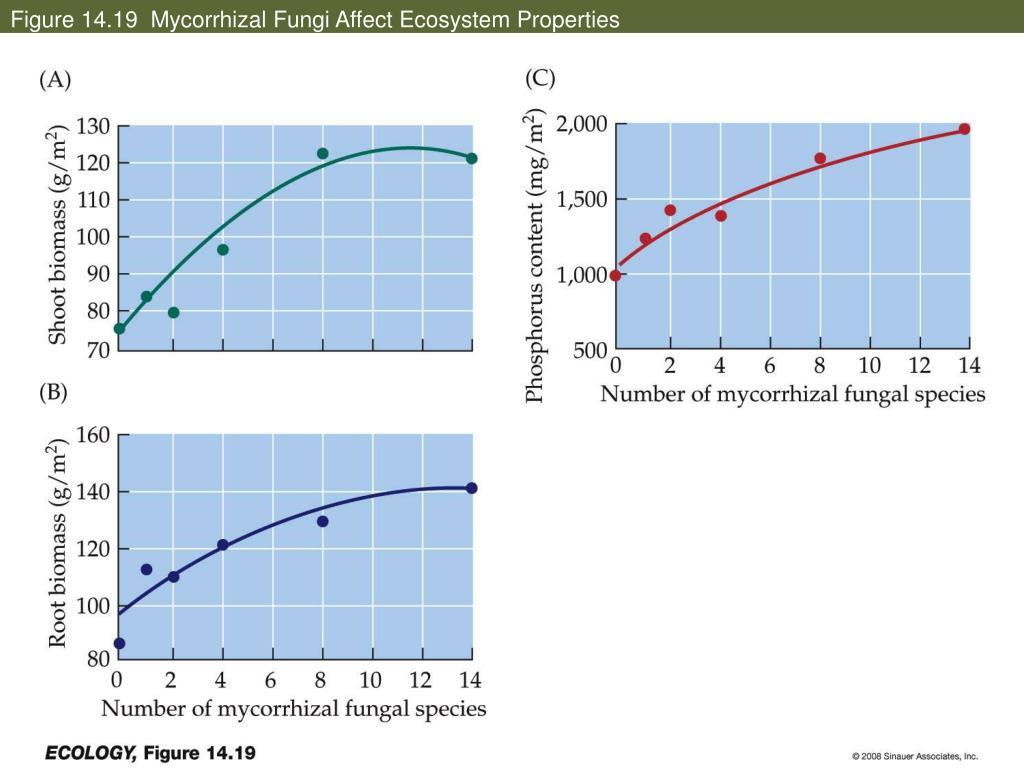 Figure 14.19  Mycorrhizal Fungi Affect Ecosystem Properties