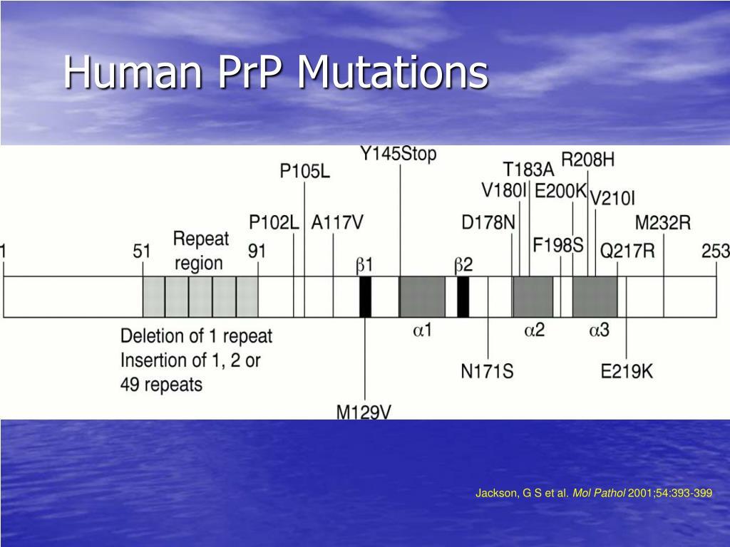 Human PrP Mutations