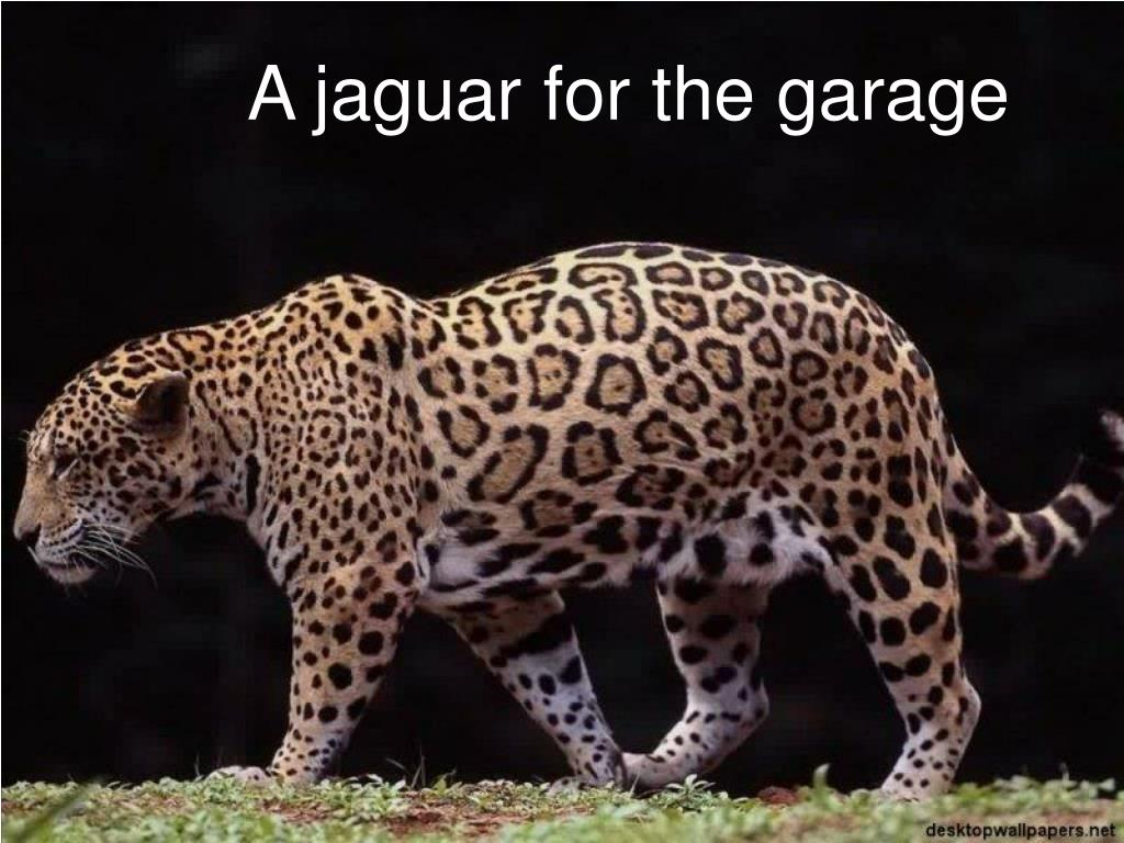 A jaguar for the garage