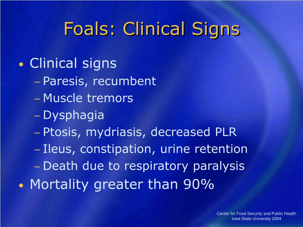 Foals: Clinical Signs