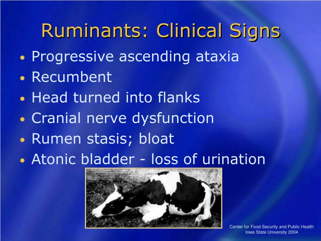 Ruminants: Clinical Signs
