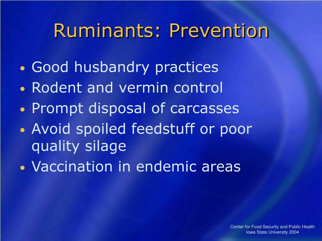 Ruminants: Prevention