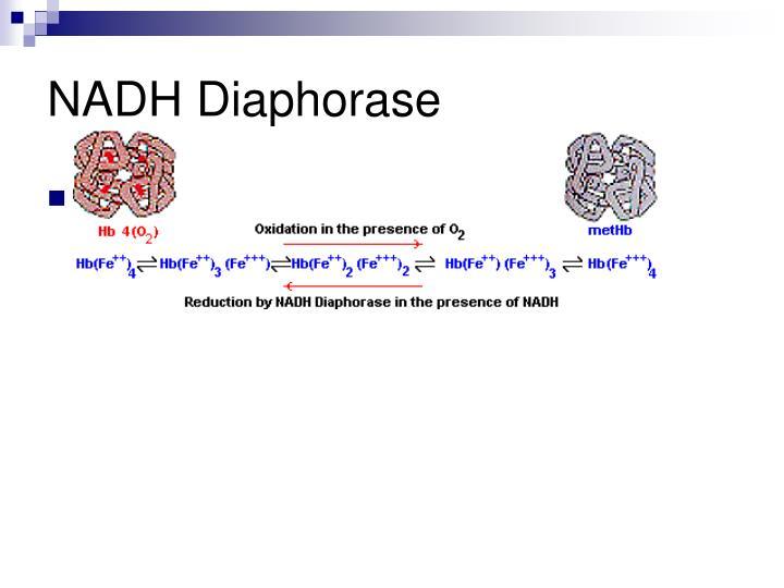 NADH Diaphorase