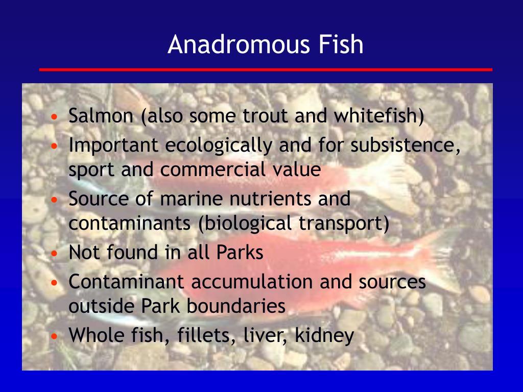 Anadromous Fish