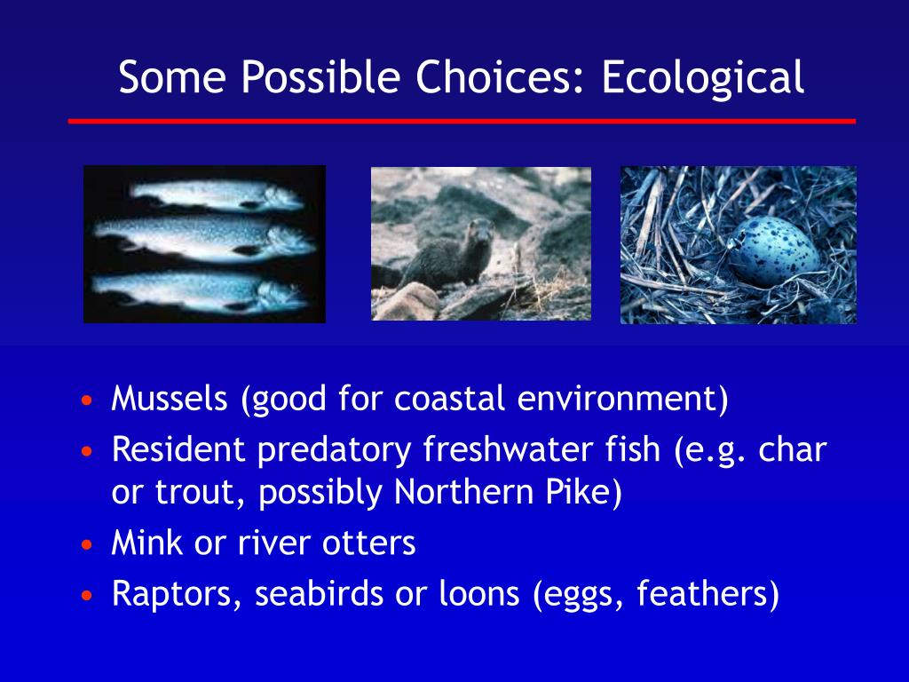 Some Possible Choices: Ecological