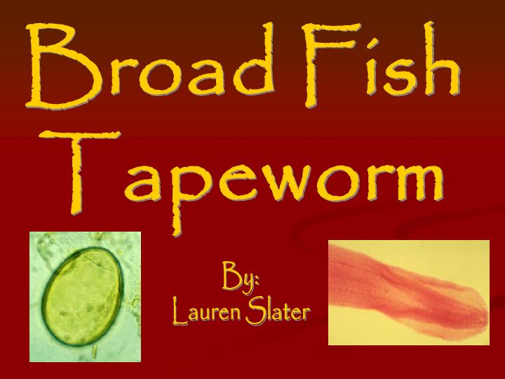 Broad Fish