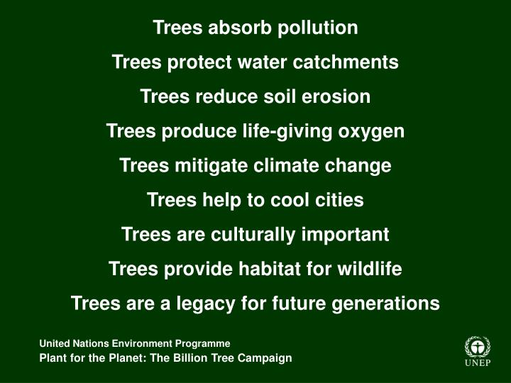 Trees absorb pollution