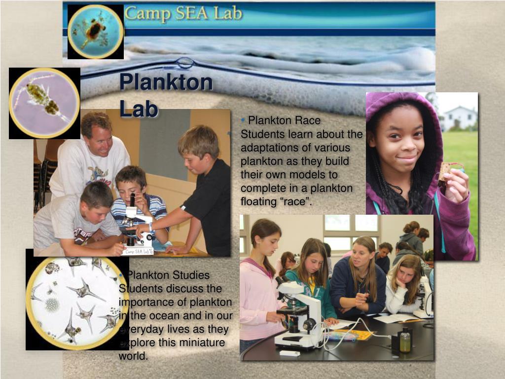 Plankton Race