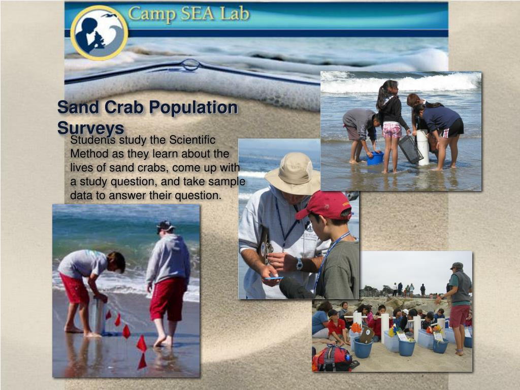 Sand Crab Population Surveys