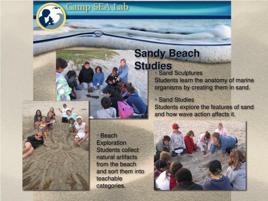 Sandy Beach Studies