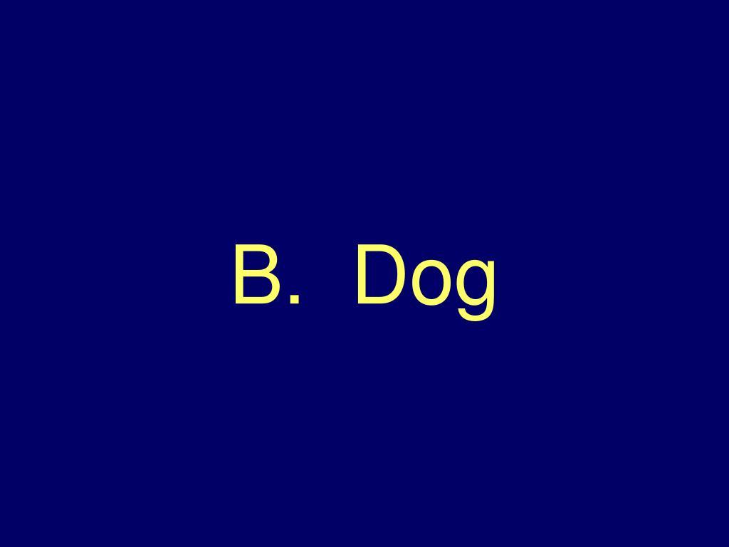 B.  Dog