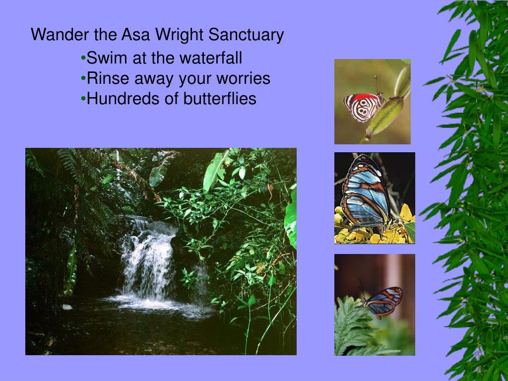 Wander the Asa Wright Sanctuary