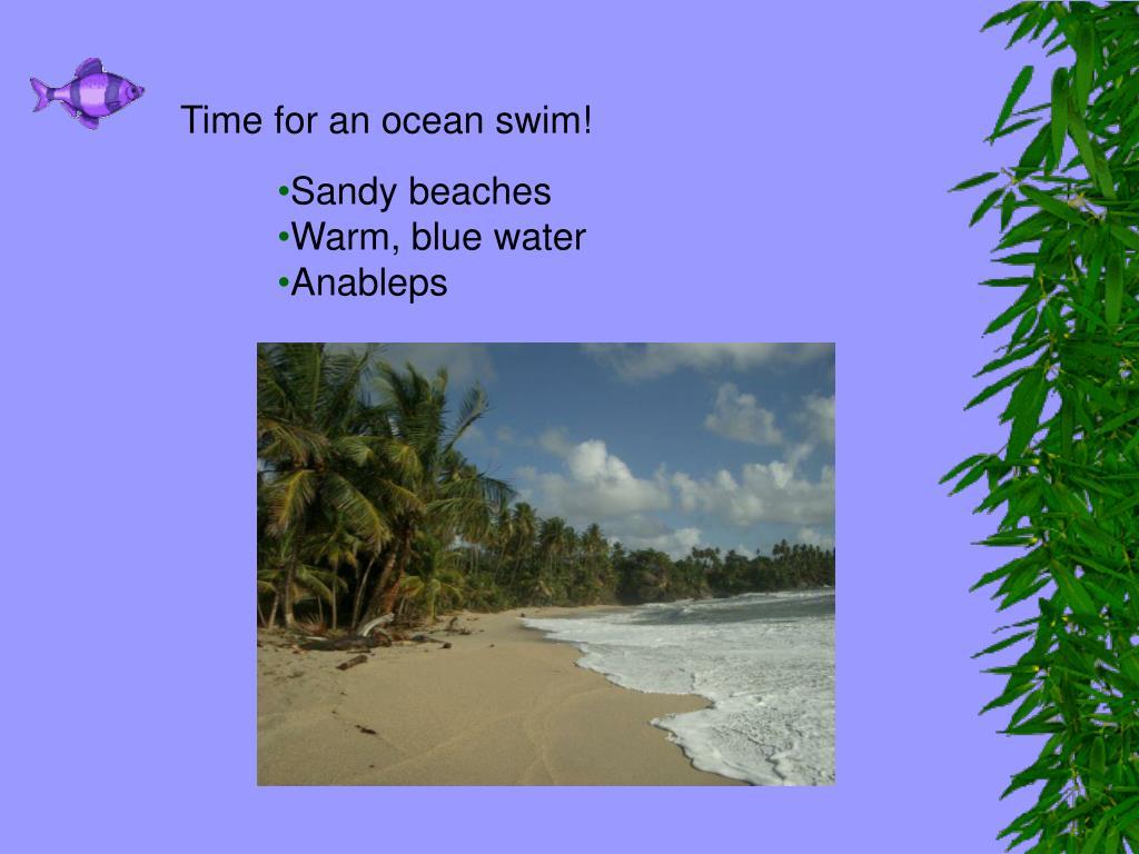 Time for an ocean swim!
