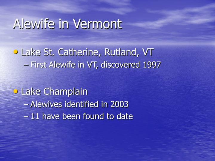 Alewife in Vermont