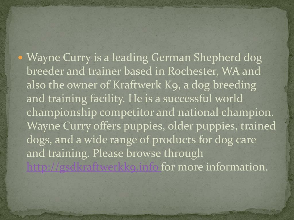 Wayne Curry is a leading German Shepherd dog breeder and trainer based in Rochester, WA and also the owner of Kraftwerk K9, a dog breeding and training facility. He is a successful world championship competitor and national champion. Wayne Curry offers puppies, older puppies, trained dogs, and a wide range of products for dog care and training. Please browse through