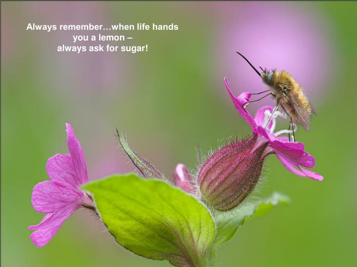 Always remember…when life hands you a lemon –