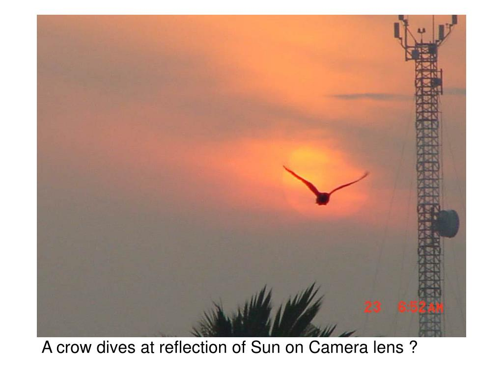 A crow dives at reflection of Sun on Camera lens ?