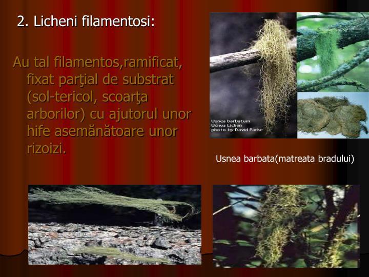 2. Licheni