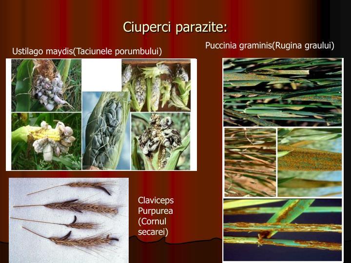 Ciuperci parazite: