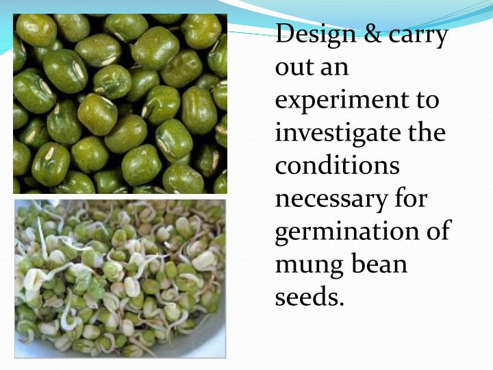 Design & carry out an experiment to investigate the conditions necessary for germination