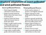 structural adaptations of insect pollinated and wind pollinated flowers
