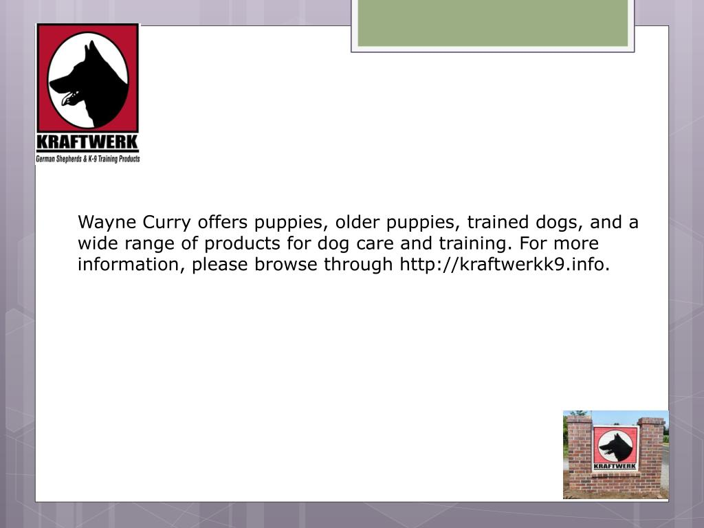 Wayne Curry offers puppies, older puppies, trained dogs, and a wide range of products for dog care and training. For more information, please browse through http://kraftwerkk9.info.