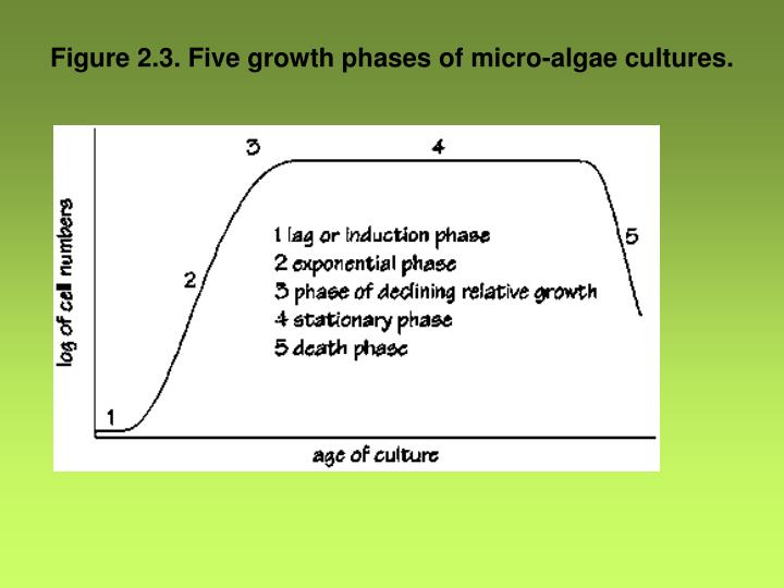 Figure 2.3. Five growth phases of micro-algae cultures.