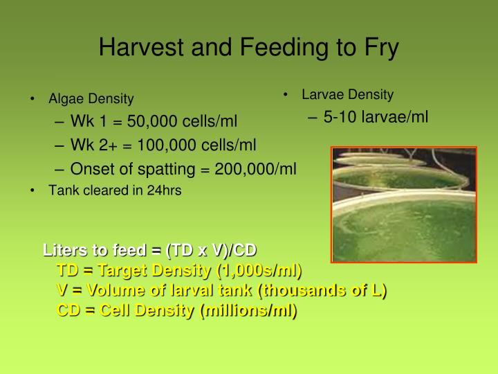 Algae Density