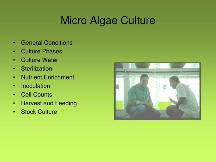 Micro Algae Culture