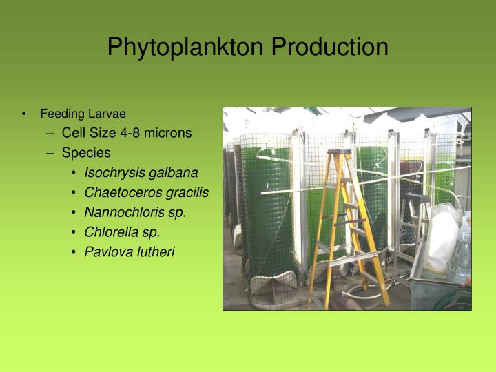 Phytoplankton Production